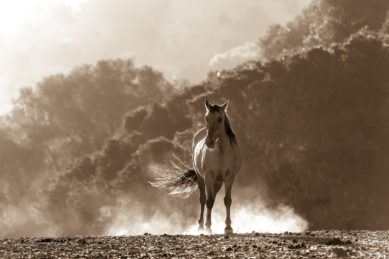 Return to Freedom, American Wild Horse Sancturary (Lompoc,CA)