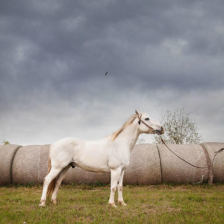 Daria Ratliff photography Katy, TX family and lifestyle photographers