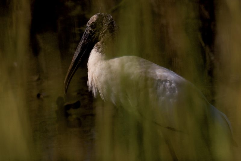 "Wood Stork Portrait<br /> <br /> Different, and I really like, but has never been ""wowed"" over, except by me.  Prints well, or did in the calender last year.<br /> <br /> <br /> no: arubaphoto<br /> <br /> He has a catch light in his eye.  That is a plus."