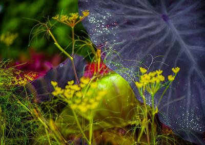 'Dewdrop Magic,' Chicago Botanic Garden, 2017