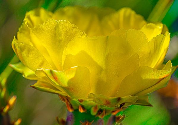 Macro Blooms
