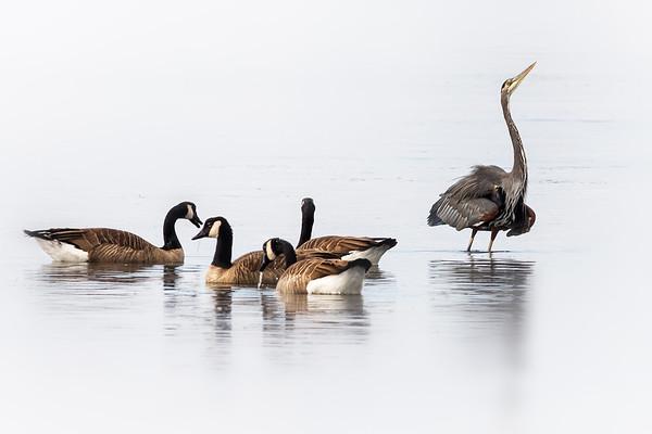 the avian social life of birch bay