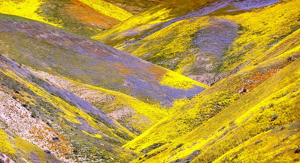 Super Bloom - Carrizo Plains