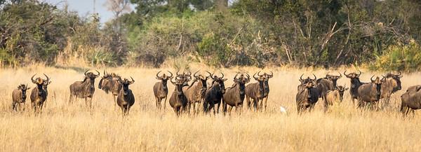 Botswana & the Okavango Delta
