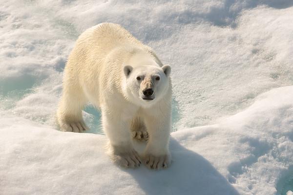 The Arctic 2014