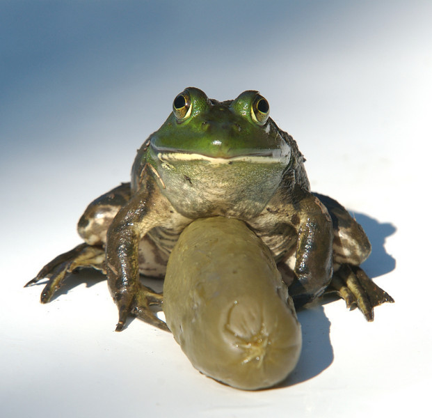Frog with Pickle