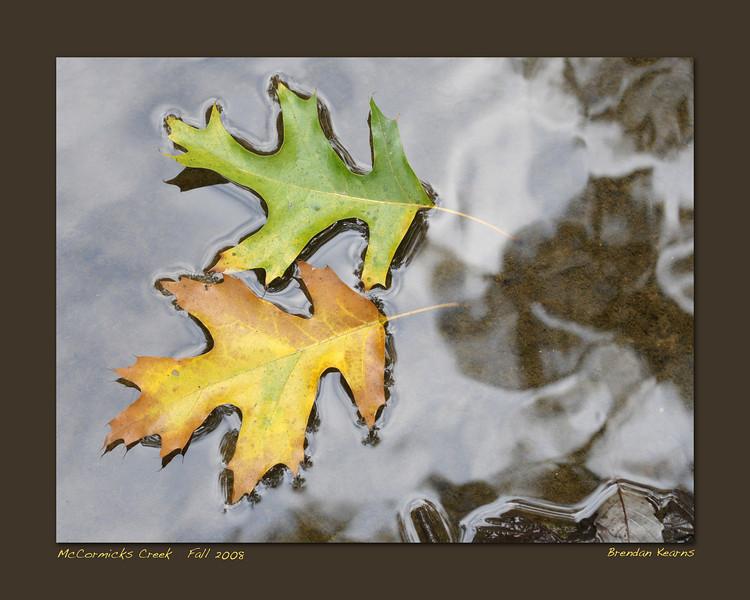 20x16 Print  McCormicks Creek, Owen County, Indiana  Fall 2008