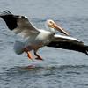 RM - Pelican Landing