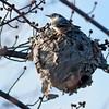 RM - Bird with Nest