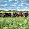 Pasture landscape