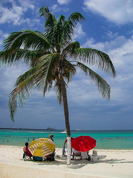 palmieri si ocean