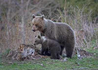 Mother and new cub
