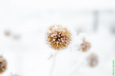 Winter Morning 88