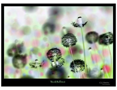 dandiballoons