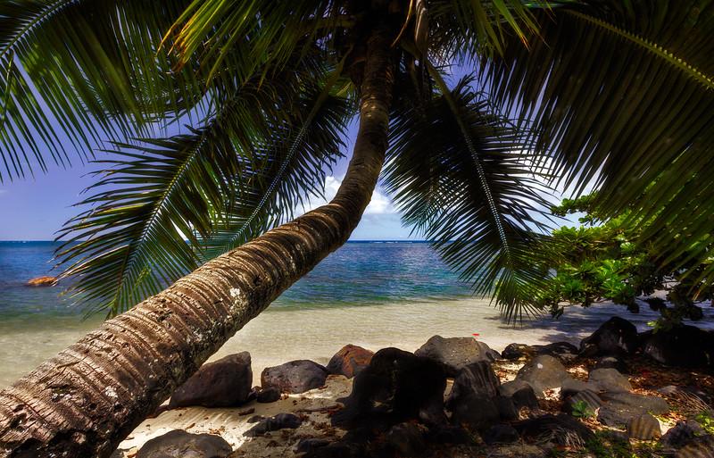 Palm Tree - Kauai, HI