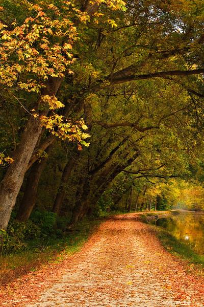 C&O Canal - Potomac MD - Landscape