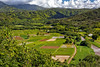 Taro Fields - Kauai, HI
