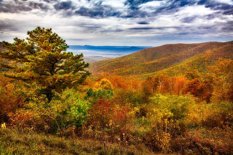 Fall - Skyline Drive VA
