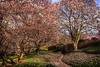 Dumbarton Oaks - Georgetown, Washington DC