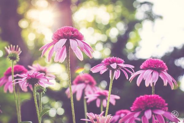 Flowers / Plants / Birds