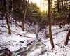 Hemlock Forest - Trail 2A