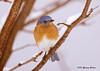 """<div class=""""jaDesc""""> <h4> Male Bluebird on Snowy Perch</h4> </div>"""