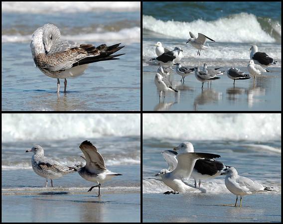 "<div class=""jaDesc""> <h4> Seagull Collage #2 </h4> <P> <p> </div>"