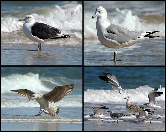 "<div class=""jaDesc""> <h4> Seagull Collage #3 </h4> <P> <p> </div>"