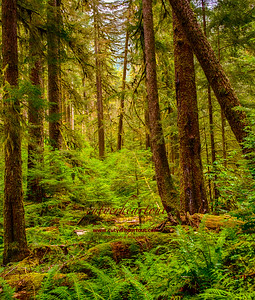 Olympic Peninsula Hike