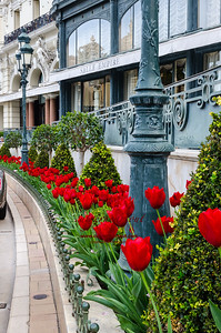 Tulips in Monaco