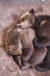 Cuddling Bears Stockholm, SE