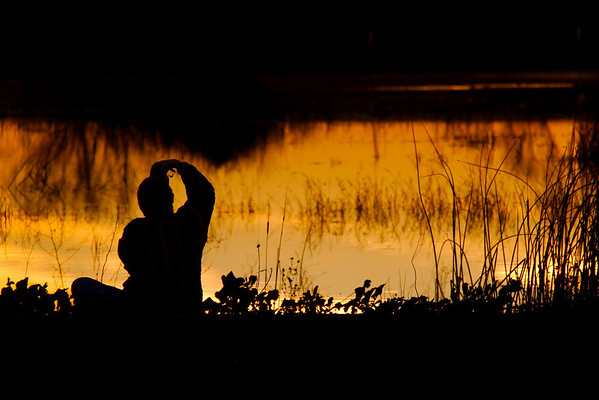 Shooting The Last Light Yolo Basin, Yolo County, CA, US
