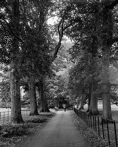 Avenue of trees.