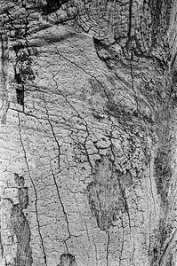 Oak tree detail 1