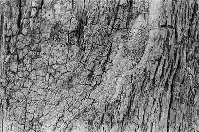 Oak tree detail 2