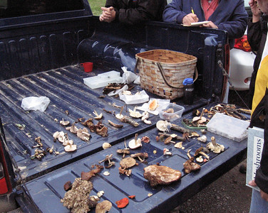Truck bed of finds