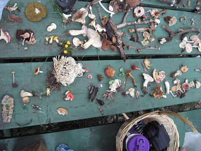 Table of Finds