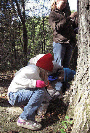 Madison and Samantha check out the fungus at the base of a tree while Katie checks out what's on the bark.