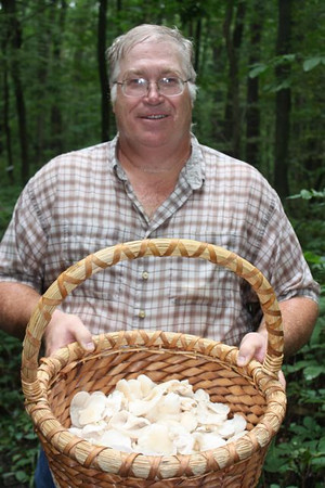 A nice basket full of oysters, Pleurotus ostreatus