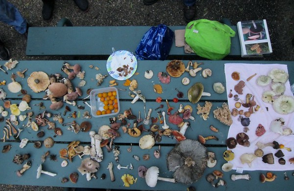 The table of fungi
