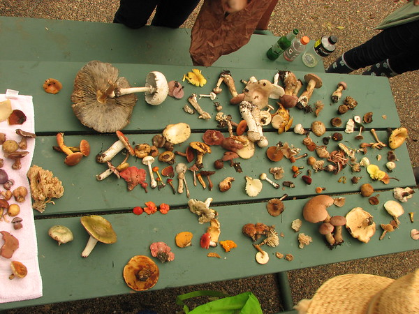 The table with some of our finds. Most of these were present in large numbers in the woods.