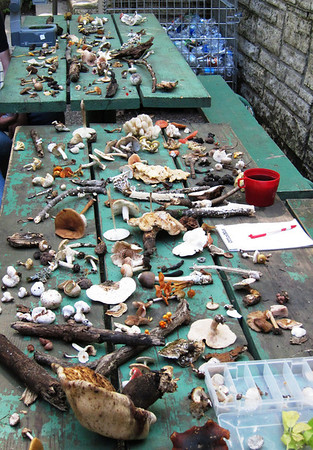 The table of fungus collected at the foray