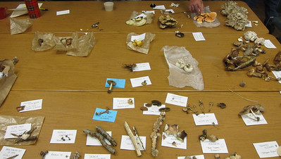 The table of identified mushrooms.