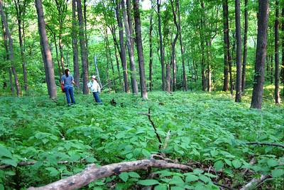 Tessa and Jana in a sea of itch weed.