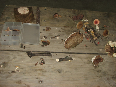 A sample of the mushrooms found at Ashton Wildwood Park.
