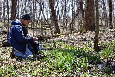 Damian checks out some Ramps or spring Onoins (Allium tricoccum).