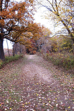 The trail headed north into the woods.