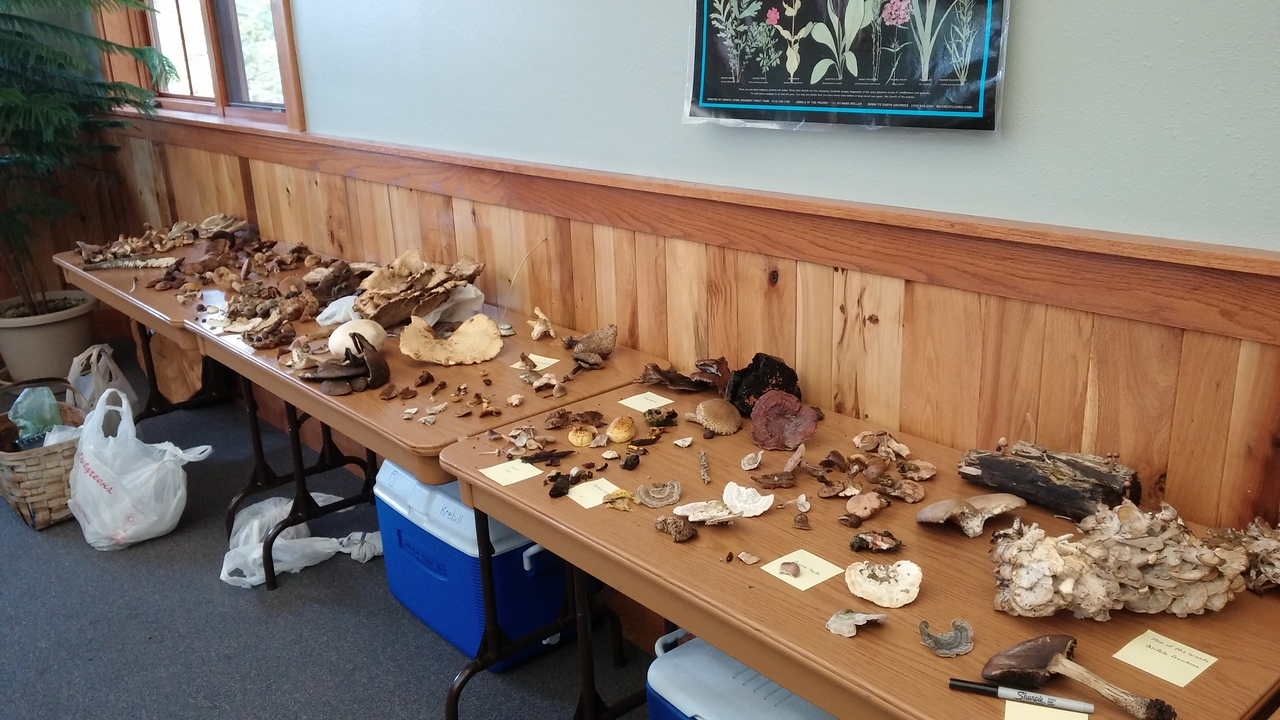 The table of finds