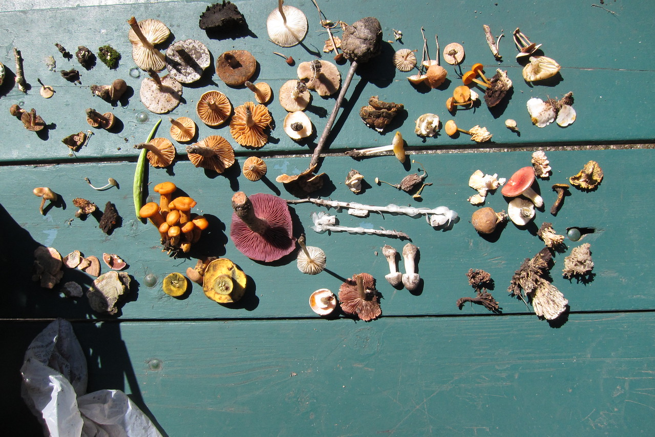 A portion of what was collected.