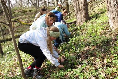 """Combing the hillside for morels. Many """"Greys"""" were found."""